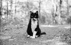 IMG_0029 (mcdenis13) Tags: portrait film cat 50mm iso tc plus konica 135 ilford fp4 125 autoreflex hexanon f17 chatonne