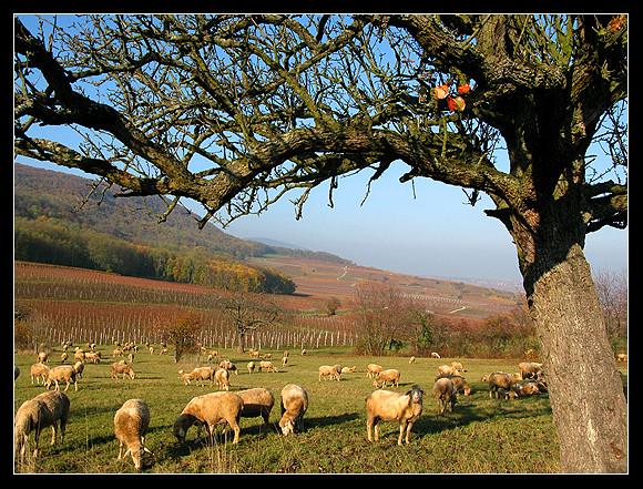 l'automne express - Page 5 6337451874_66345f7b34_z