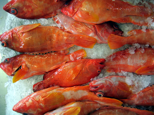 Fish in market, New Caledonia. Photo by Jamie Oliver, 2005