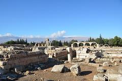 Anjar, Umayyad city, al-Walid I, 705-15 (Prof. Mortel) Tags: lebanon umayyad anjar