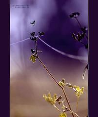 pi in la del filo    (swaily  Claudio Parente) Tags: nikon paint violet nikond50 claudioparente swaily checchino saariysqualitypictures bestcapturesaoi musictomyeyeslevel1