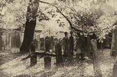 Cimitero ebraico di Ferrara (Luca Z) Tags: ferrara cimitero ebraico