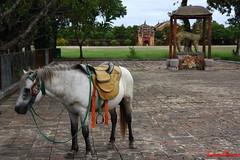 The Imperial Citadel (lucianomancini) Tags: horse vietnam hue thecitadel