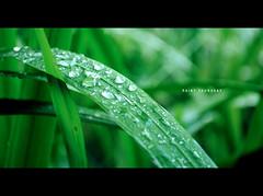 [321/365] Rainy Thursday (Dodzki) Tags: november nikon 2011 cebusugbo d5000