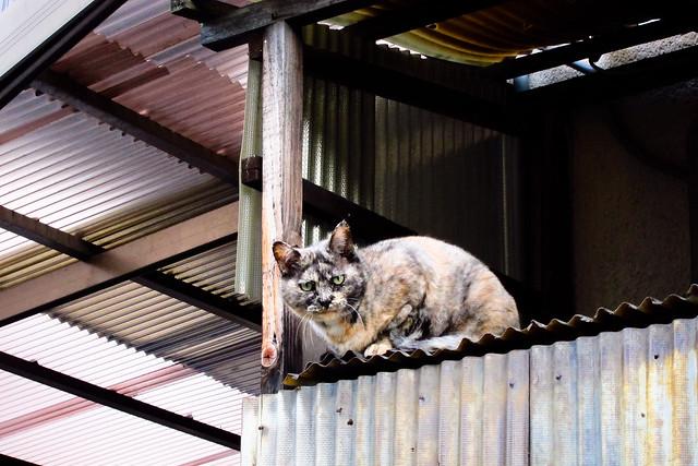 Today's Cat@2011-10-05