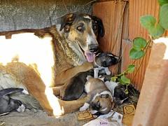 perro 23 (Laura.BDN) Tags: dog chien naturaleza nature animals cane natura perros animales animaux animali dyr