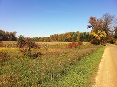 Michigan Fall Scenery Running