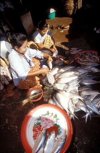 Fish market, Cambodia. Photo by Dominyk Lever, 2004