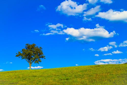 無料写真素材, 自然風景, 樹木, 丘, 草原