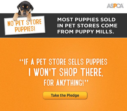 Blog the Change to Stop Puppy Mills