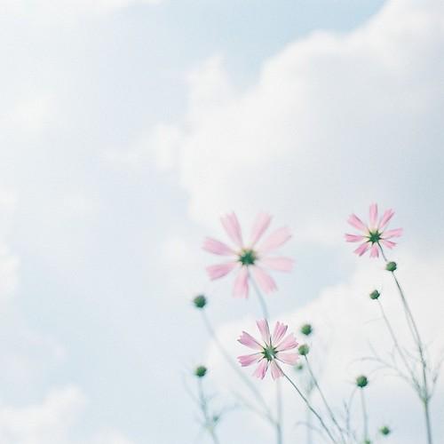 空に咲く花。 by kero*