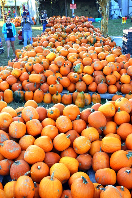 Walden Farm: Pumpkins and more pumpkins