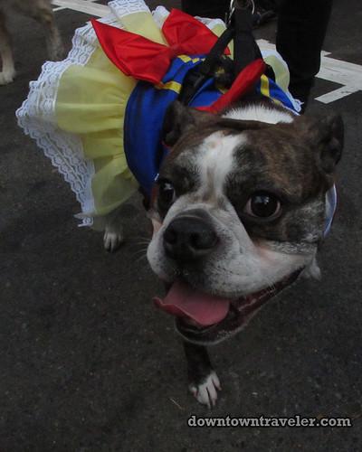Tompkins Park Halloween Dog Parade