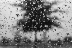 An October Rain 3 (Dante Recknagel) Tags: blackandwhite tree window water rain drops distorted 35mmfilm grainy magnified ilford3200