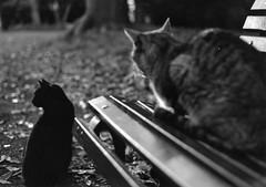 Indiferente (jorgebenjardino) Tags: cats cat gatos gato jorgebenjardino