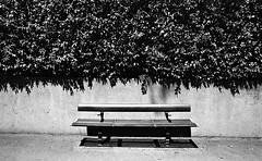 Bench (Pedro Figueiredo Xavier) Tags: street film photography sydney pushed foma fomapan
