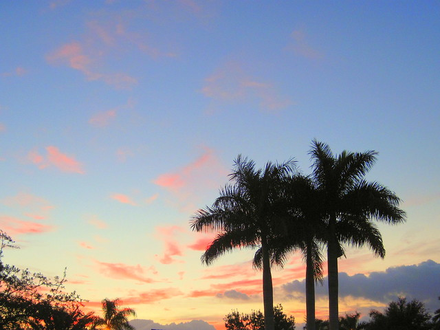 Royal Palms at sunrise 20111026