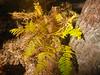 planta en otoño (juanpablo.santosrodriguez) Tags: autumn trees wallpaper tree verde green yellow hojas arbol arboles amarillo otoño leafs fondodeescritorio