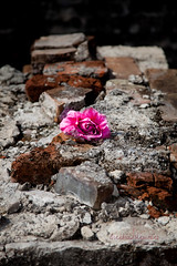 New Orleans Cemetary/Cemetery (~ Creating Memories ~) Tags: trip pink flower broken cemetery grave canon dead death louisiana alone sad mark neworleans cemetary bricks warped graves spooky ii 5d lonely destroyed broke deaths creatingmemories