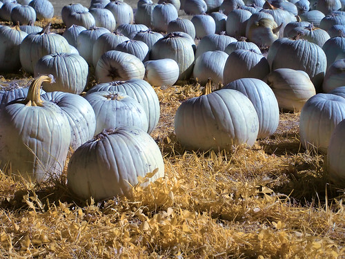 Pumpkins 2011 - Infrared