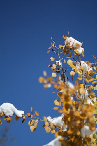 aspen leaves-3