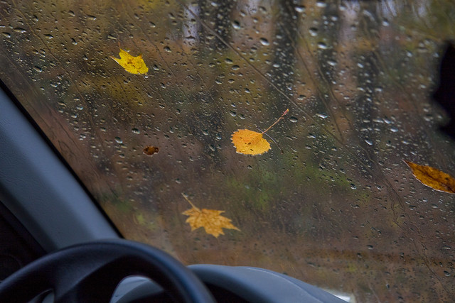 leafy windshield