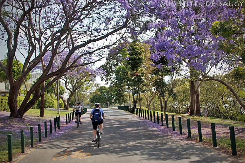 bikeride17_edited-1