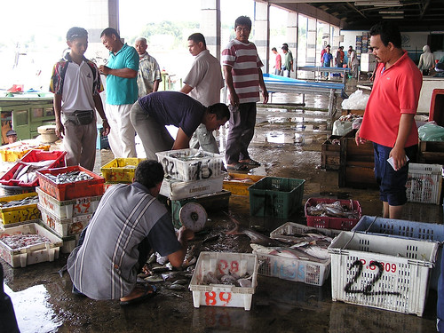 Preparing fish for market, Malaysia. Photo by Hong Meen Chee, 2005