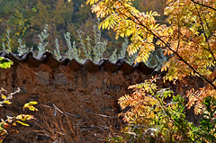 Controluce d'autunno - Autumn backlight (Ola55) Tags: wood autumn italy plants leaves foglie piante autunno perugia umbria italians bosco montemalbe the4elements mywinners aplusphoto flickrdiamond worldtrekker yourcountry ola55