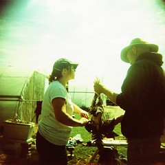 pluck, pluck. (candace hope) Tags: mediumformat holga newhampshire ishootfilm slaughter crossprocessing farmlife deadchicken animalslaughter september2011 killingchickens pluckingfeathers