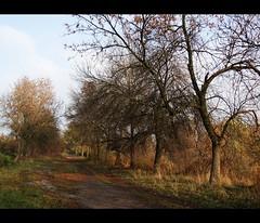 a forgotten alley (JoannaRB2009) Tags: city autumn light plants sun mist fall nature fog colours path peaceful poland polska sunny natura calm lodz słońce łódź jesień miasto światło przyroda mgła kolory rośliny ścieżka doubleniceshot