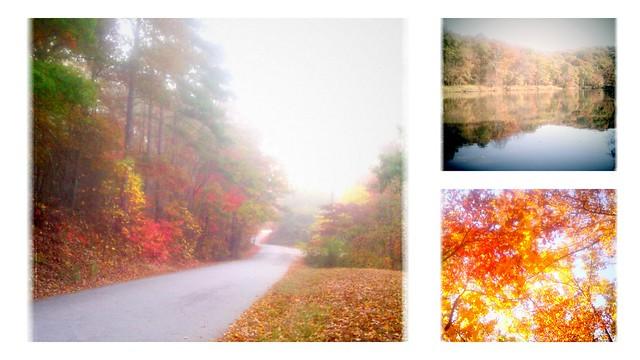 fall walks
