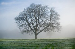 Naked Tree on a Moody and Misty Day - Camperdown Park - Dundee Scotland (Magdalen Green Photography) Tags: autumn nature fog scotland pretty dundee 2006 haar camperdownpark nakedtree calmnaturescene iaingordon magdalengreenphotography moodyandmistyday