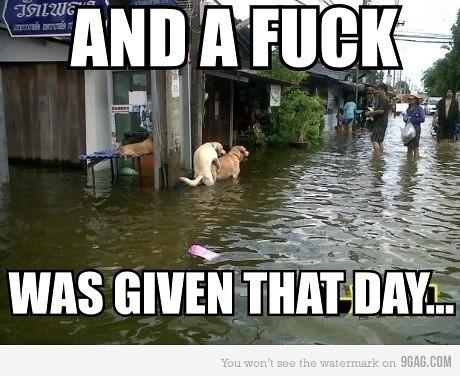 flood dogs
