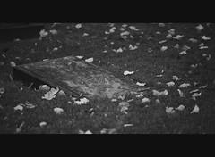 Good bye (Jonas Tana) Tags: gravestone leafs gravsten lv hautakivi