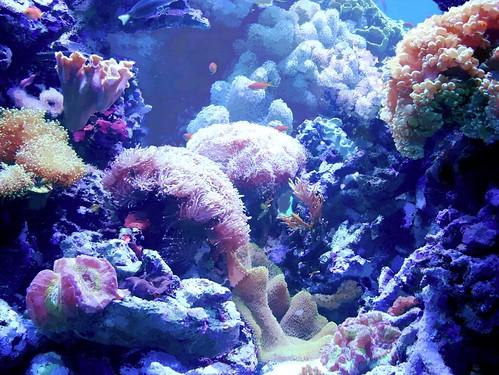 medusa stage 2