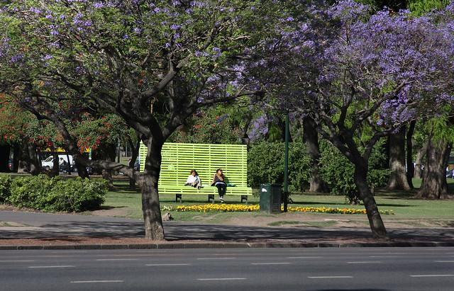 Jacaranda en Buenos Aires 017
