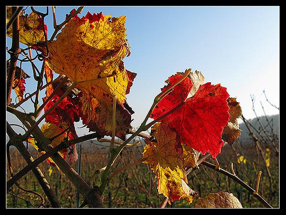 l'automne express - Page 5 6336696165_f889b48501_z