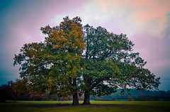 The tree(s) of life... (Alexandre Moreau | Photography) Tags: autumn trees two sky tree nature clouds kent twins colours 21 pair twin arbres together pairs coloured bigfish paired twintrees