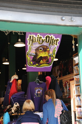 Hairy Otter.....