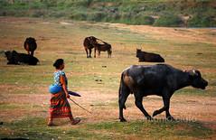 woman with buffalo