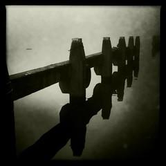 Spirits of the Dead (eschdali) Tags: world winter light blackandwhite white mist black water netherlands beautiful amsterdam movement afternoon wind zwartwit almost photostream altrafoto neroameta