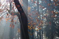 Spiragli di luce (Riccardo Brig Casarico) Tags: morning autumn light italy sun flower tree colors alberi wow photography 50mm photo reflex nikon europa europe italia colours foto details fantasy dettagli fotografia nikkor sole autunno colori atmosfera luce brig giorno riki naturesfinest boschi atmosphre d5100 brigrc
