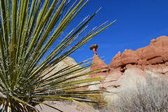 the red toadstool through yucca (heatherandchris) Tags: red rock utah hiking formation toadstool slickrock paria