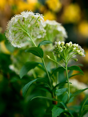 PhoTones Works #1015 (TAKUMA KIMURA) Tags: plant flower nature small    kimura ep3 takuma    zd1260 photones