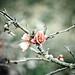 Flores de marzo