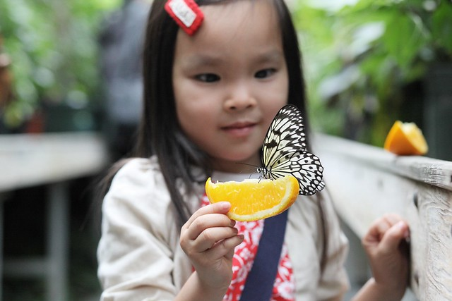 butterfly show @ carleton u