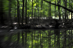star power (julie scholz) Tags: trees lensbaby forest stars nikon nyack