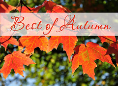 Best of Autumn