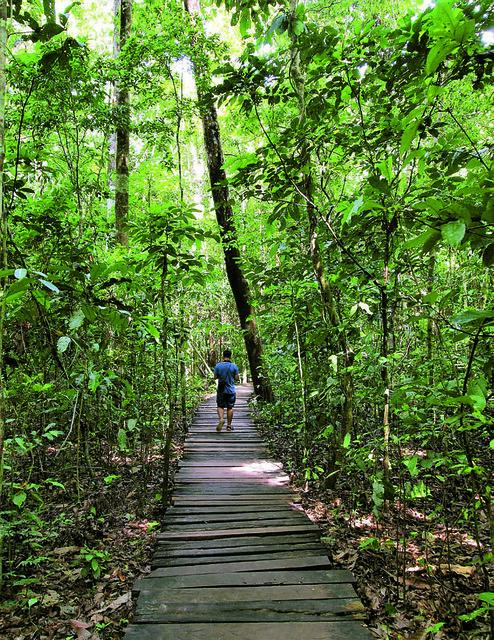 Trail to Puerto Princesa Underground River